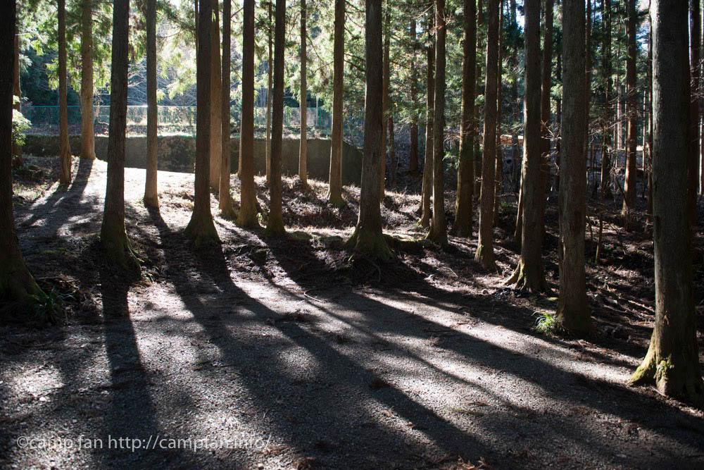 西の森:椿荘