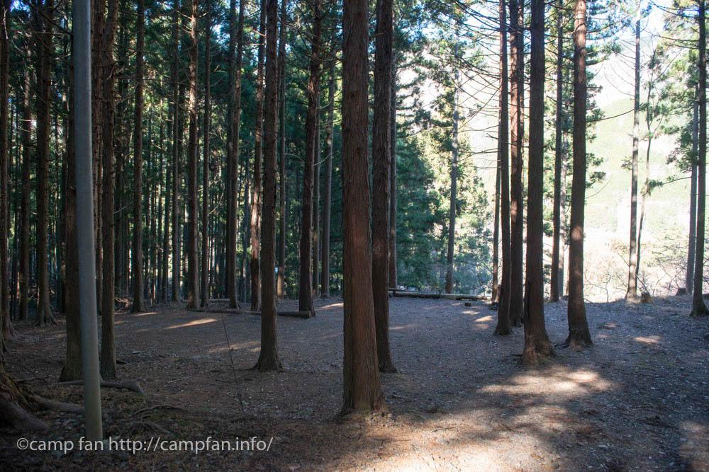中央の森:椿荘